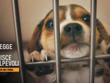 Siracusa – LAV: Novità legislative sugli animali domestici e una petizione da sottoscrivere