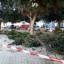 Pachino- Si potano gli alberi di alcune piazze