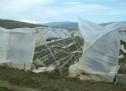 Siracusa- Non è ancora arrivata al Ministrero Agricoltura la richiesta di stato di calamità della Regione Sicilia.