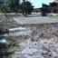 Siracusa – Strano ambientalismo: Il Comune continua ad abbattere alberi sostituendoli con il cemento.