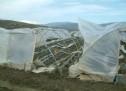 Siracusa- Sul sito della Regione il ristoro dei danni agli agricoltori per la nevicata di fine anno.
