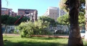 Siracusa – Piazza Adda senza i suoi alberi. L'amministrazione comunale dopo un giudizio sommario li ha condannati a morte. Protestano alcuni consiglieri.
