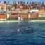 Siracusa -Pallanuoto: Ortigia vince lo scontro con la Lazio Nuoto