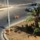 Augusta – Il randagismo diventa un problema che l'amministrazione pensa di risolvere proponendo l'adozione dei cani.