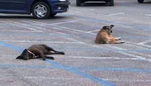 Cani Randagi in città