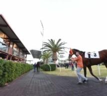 Siracusa – Cavalli pronti a correre nell'atteso pomeriggio del 25 aprile.