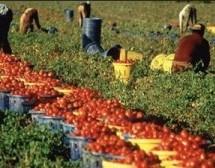 Siracusa- Il Prefetto promuove il piano di contrasto al lavoro nero e il caporalato in agricoltura