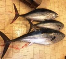 Siracusa: La Guardia Costiera effettua un movimentato sequestro di 3 tonni fuori quota di cattura.
