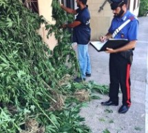 Melilli- Carabinieri scoprono piantagione di marijuana arrestato proprietario
