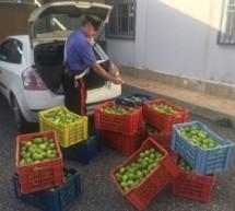 Siracusa/Palazzolo: Tre casi di violenza in famiglia; Arrestato siracusano per ordine di carcerazione; fratello e sorella arrestati per furto di alimentari; Arrerstato mentre rubava 300 kg di limoni.