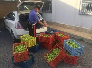 I limoni recuperati dai carabinieri