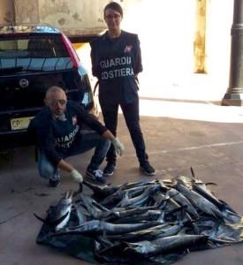 il pesce novellame sequestrato dalla GC