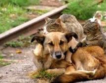Siracusa – L'assessore Moscuzza promuove la campagna di sterilizzazione di cani e gatti.