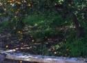 Siracusa – L'associazione Save Villa Reimann protesta per la perdurante chiusura del parco e scrive al sindaco