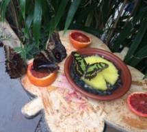 Siracusa – Inaugurata la casa delle farfalle che i turisti potranno visitare