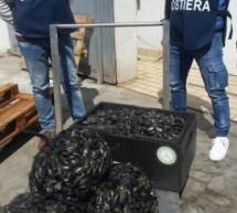 """Siracusa – Operazione """"100″conclusa: Controlli della Guardia Costiera e sequestri per la pesca abusiva ."""