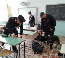 Siracusa – Carabinieri e cane antidroga all'Istituto Fermi scoprono marjuana e hashisc nei corridoi