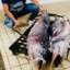 Siracusa- Sequestro della CP di pesce spada non dichiarato
