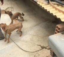 Noto:La Polizia denuncia un uomo per maltrattamento animali; Pachino: Controlli del territorio; Priolo Gargallo: incendio ed intervento della Polizia.
