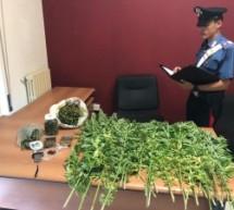 Noto. Droga in casa:Arrestata coppia 52 enne per detenzione ai fini di spaccio di stupefacente