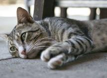 Siracusa – Rumeno denunciato per l'uccisione di un gatto