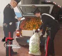 Floridia (SR) – Furto di 500 kg di agrumi: due arresti