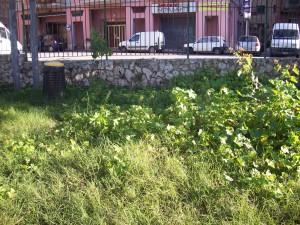 Siracusa (Neapolis) – Tanta poo poo al Dog Park di Piazza Adda